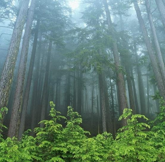 Кто погибнет без дикого леса?