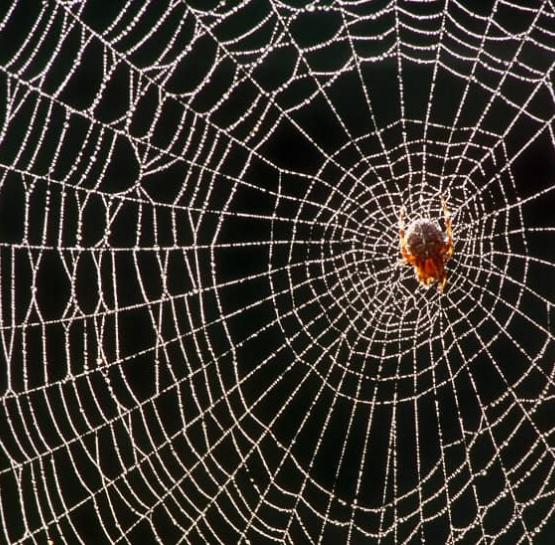 Spider silk: new perspectives