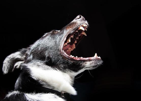Как отучить собаку лаять без причины