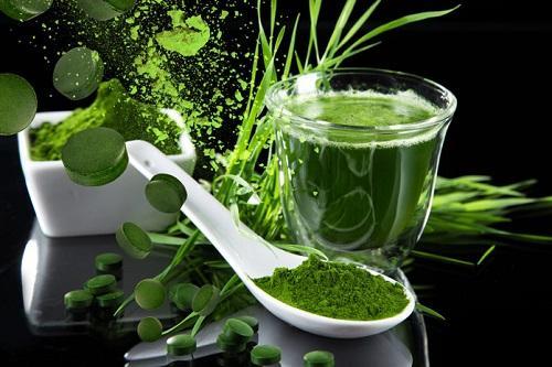 Хлорофилл – источник энергии и крепкого здоровья