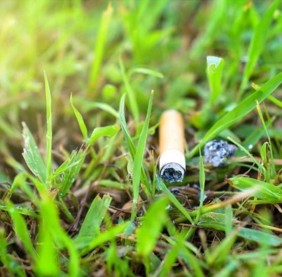 Курение вредит экологии