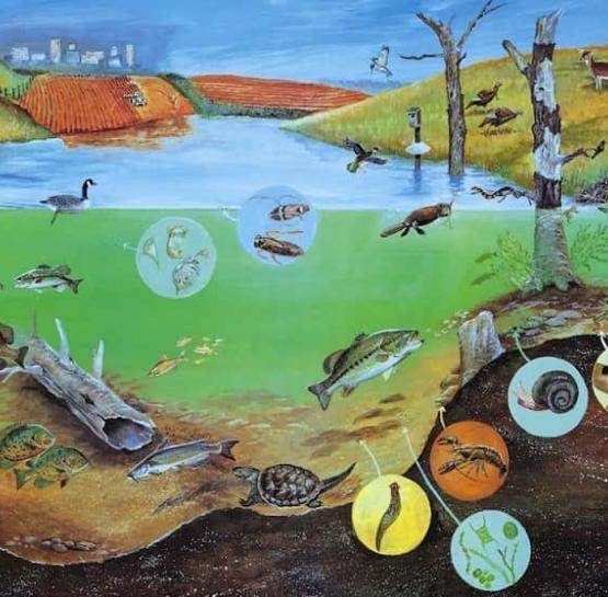 Инвазии в современных экосистемах