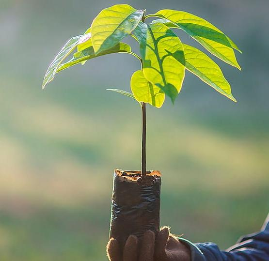 Леса Ирландии: Перезагрузка