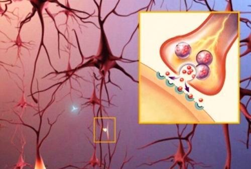Ацетилхолин — нейромедиатор, который улучшает память и концентрацию внимания