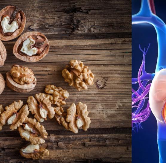 Օրական գոնե մեկ հատ ընկույզ ուտելով ՝ կվերանան հետևյալ հիվանդությունները