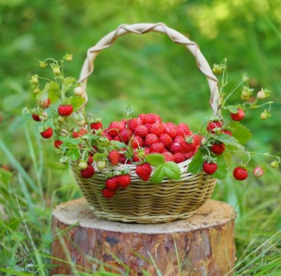 Полезные ли ягоды?