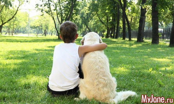 Домашние животные для детей